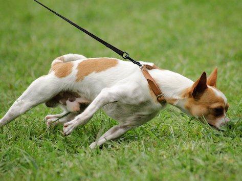 dogpullingleash